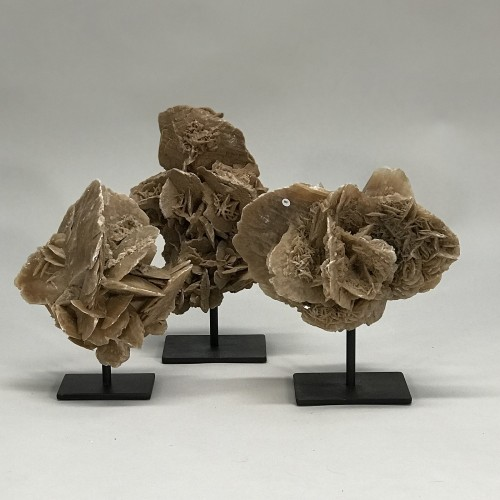 Large Abstract Desert Rose